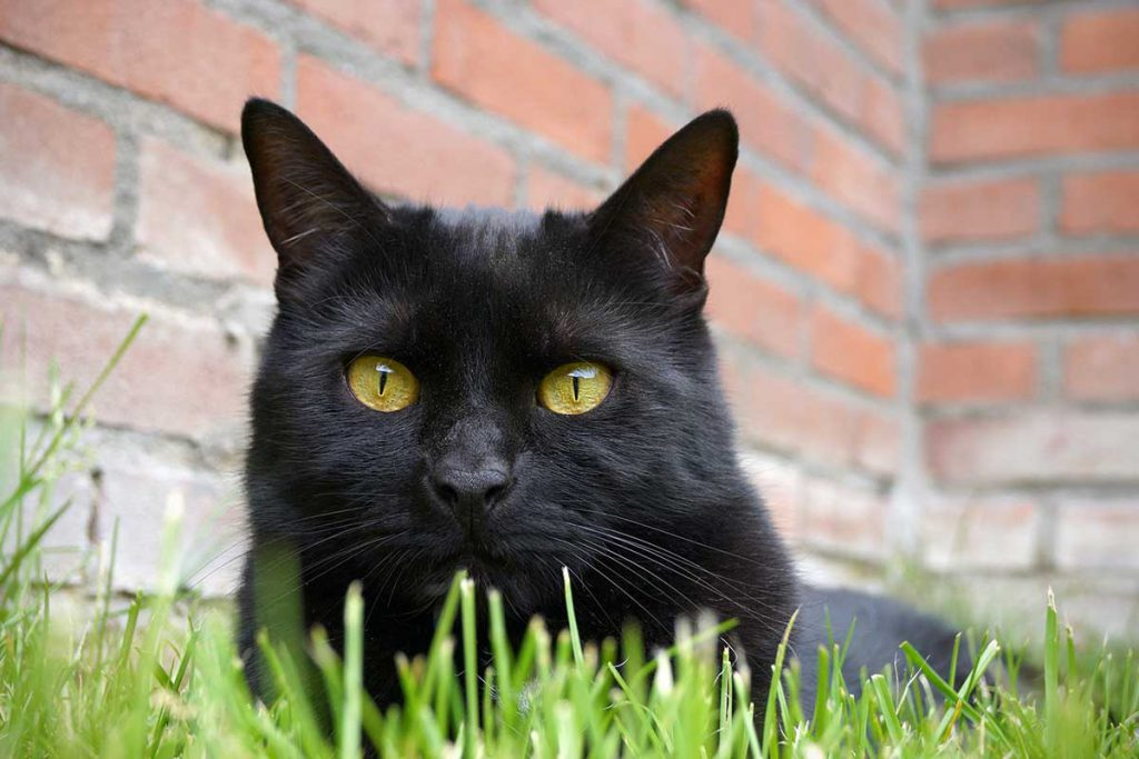 Cat, Friendly, Practice, Dierenkliniek, Broekhuizen, Katvriendelijk