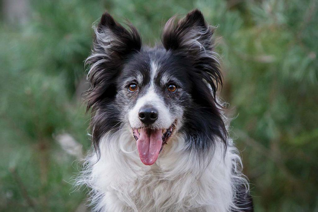Artrose, gewrichtsslijtage, hond, kat, consult, begeleiding, ouderdom
