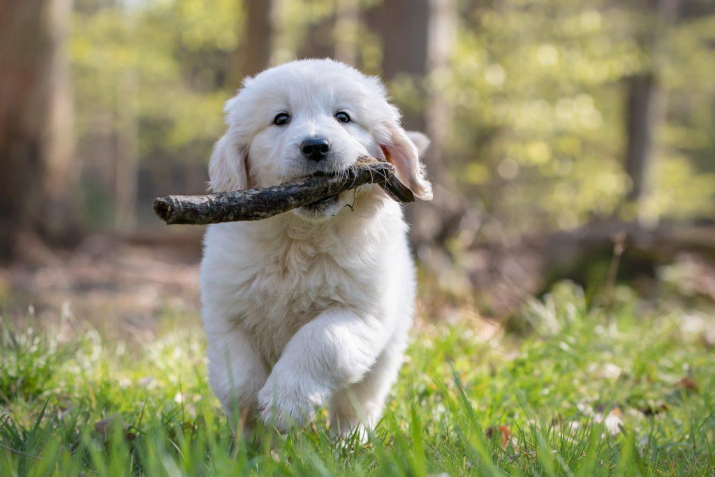 Pup, informatie, folder, puppy, Broekhuizen